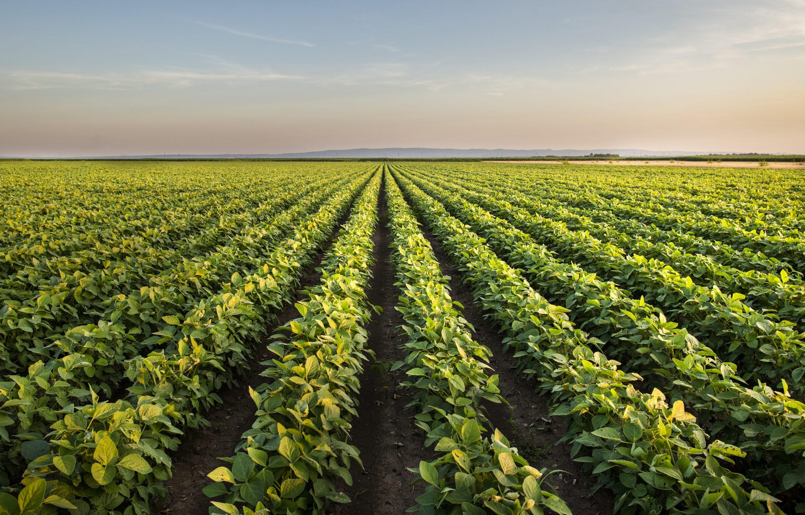 varenne agriculture